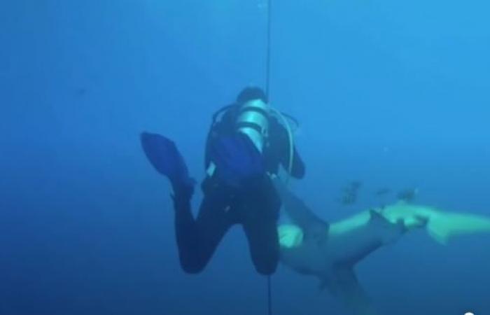 """بالفيديو- """"عضة دموية"""" من سمكة قرش في البحر الأحمر"""