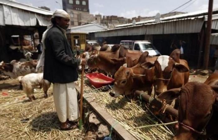"""اليمن   صنعاء.. جبايات حوثية على """"المواشي"""" تغلق محال بيع اللحوم"""