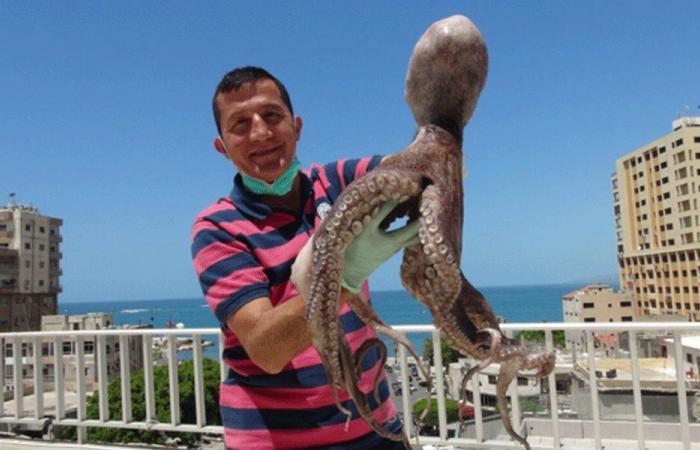 اخطبوط عملاق في شباك صيادي في صور