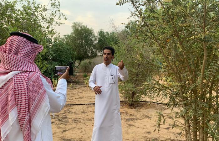 الخليح | سعودي ينجح في زراعة شجرة اللبان في محميته الخاصة