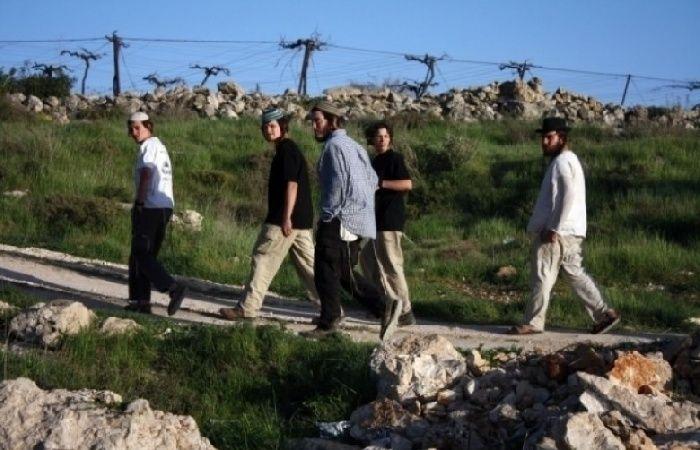 فلسطين   مستوطنون يزرعون أشجارا حرجية في أراض مستهدفة في بيت لحم