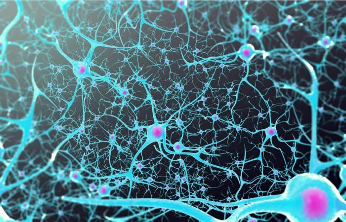 النشاط العصبي وطول العمر.. علاقة تُكشَف للمرة الأولى