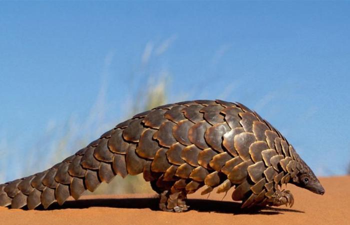 اكتشاف نوعين جديدين من كورونا.. ما علاقة حيوانات 'أم قرفة'؟