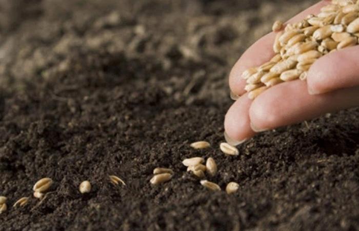توزيع شتول وبذور على المزارعين في حاصبيا والعرقوب
