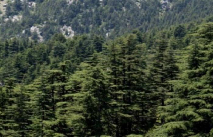 محمية غابة أرز تنورين تفتح أبوابها لاستقبال السياح
