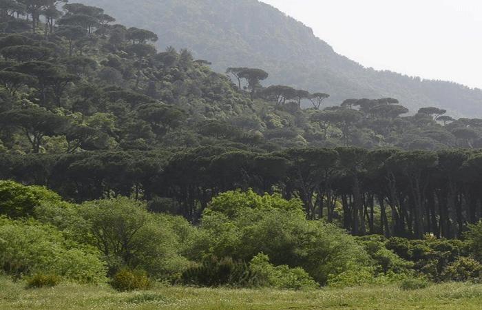 """التحالف المدني البيئي يحذّر من الاستمرار في سدّ بسري """"الفاشل"""""""