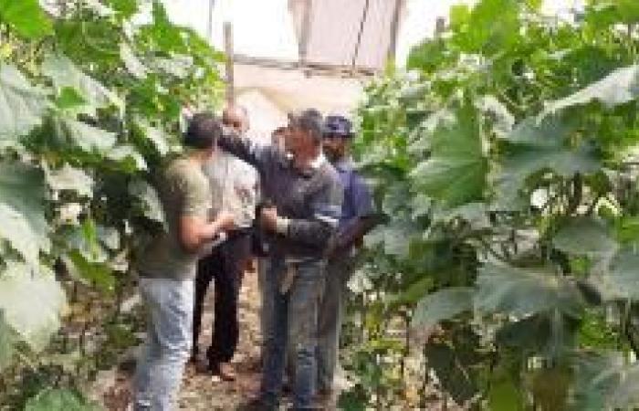 فلسطين | لقاء لمزارعي الخيار في كفردان