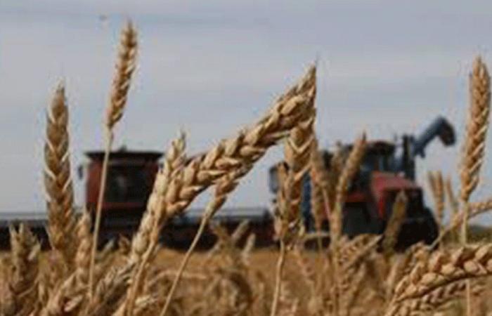 هل ينقطع القمح عن لبنان؟