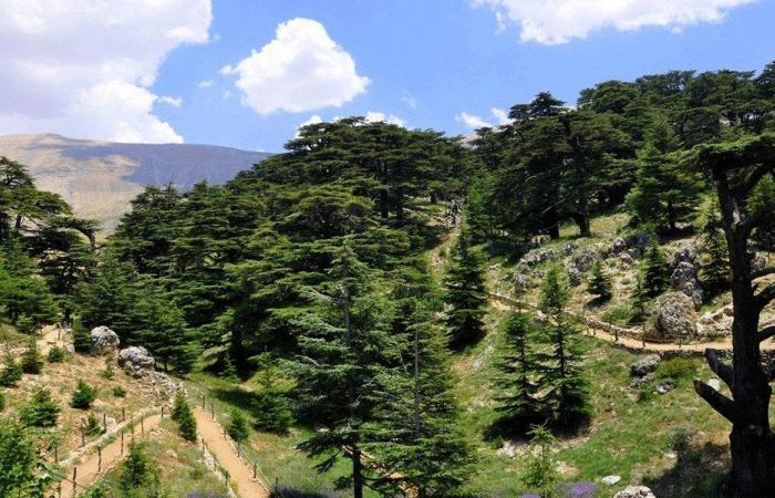 بتلون الشوفية: نحو نموذج بيئي زراعي متكامل