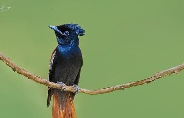 السعودية   بالصور.. طيور نادرة تعيش جنوب السعودية وهذه تفاصيلها
