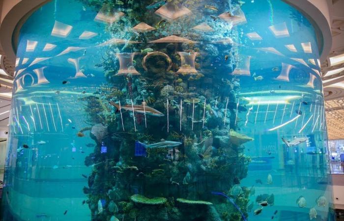 السعودية | في مطار جدة.. أكبر حوض للأسماك بالعالم وهذه التفاصيل