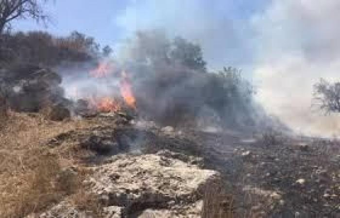 فلسطين   مستوطنون يحرقون مئات الأشجار جنوب نابلس