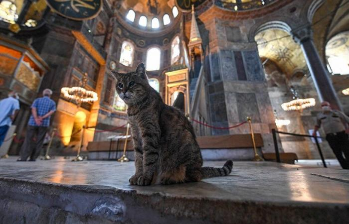 """بعد تحويل """"آيا صوفيا"""" إلى مسجد… ما مصير الهرّة غلي؟"""