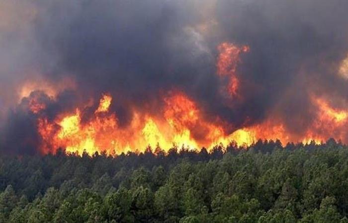 رئيس الجزائر يأمر بفتح تحقيق حول تزايد الحرائق
