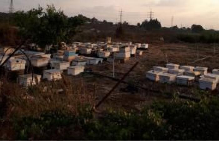 فلسطين | قلقيلية: خلايا النحل لها نصيب من الغاز المسيل للدموع