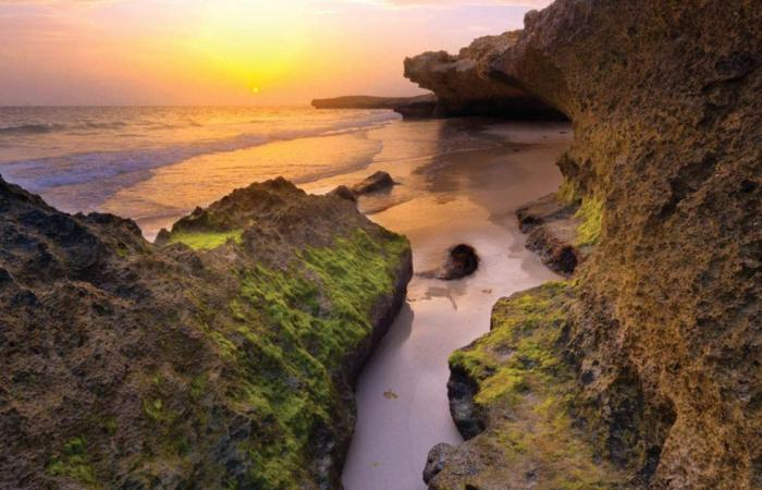 السعودية   وزير الثقافة السعودي: سنسجل محمية جزر فرسان في اليونسكو