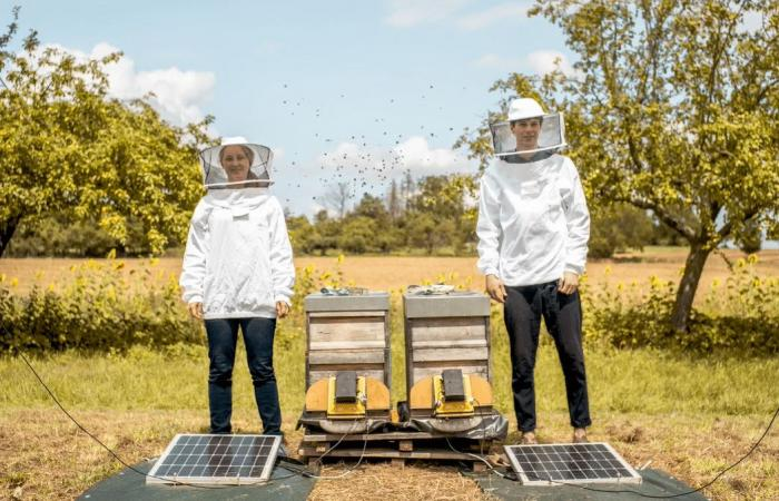 كيف يساعد الذكاء الاصطناعي في حماية النحل وزيادة إنتاجيته؟