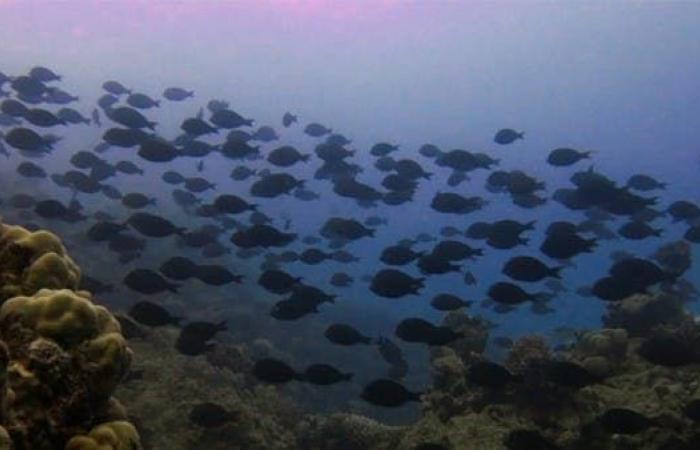 السعودية | صور.. الغوص بين حدائق الشعاب المرجانية في البحر الأحمر