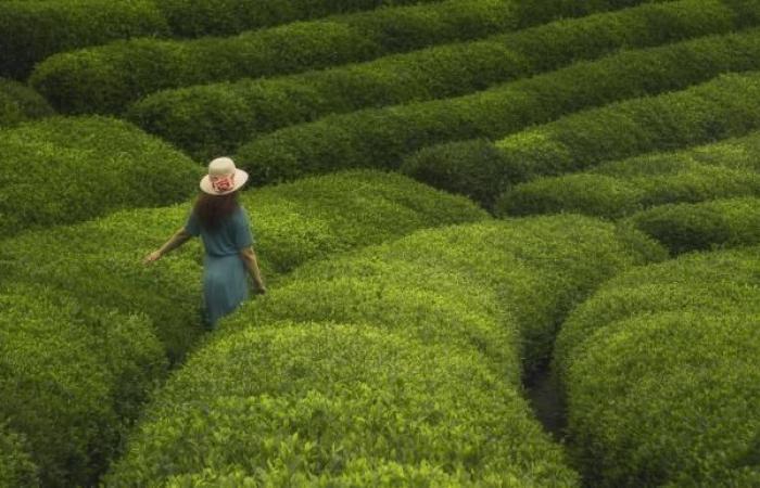 الشاي التركي على موائد 103 دول حول العالم
