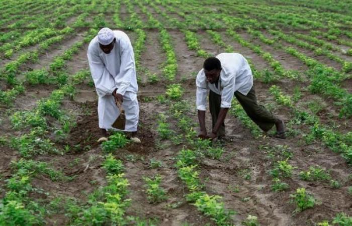 السودان: 26 مليون دولار من الأمم المتحدة لدعم صغار المزارعين والرعاة
