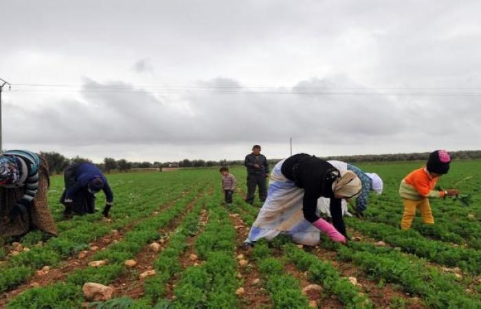 النظام السوري يسرق الأراضي الزراعية في ريف حماة بعد تهجير أصحابها