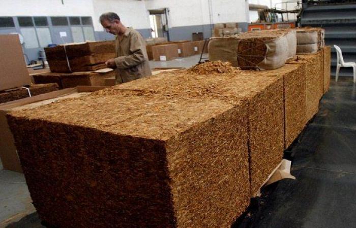 الريجي باشرت استلام محصول التبغ