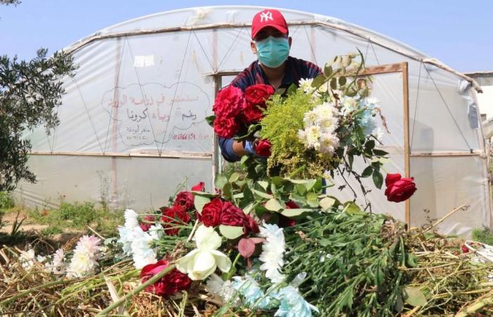 تراجع حاد بالمساحات المخصصة لزراعة الورود في غزة