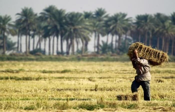 حلفاء إيران يعارضون الاستثمار السعودي في زراعة العراق