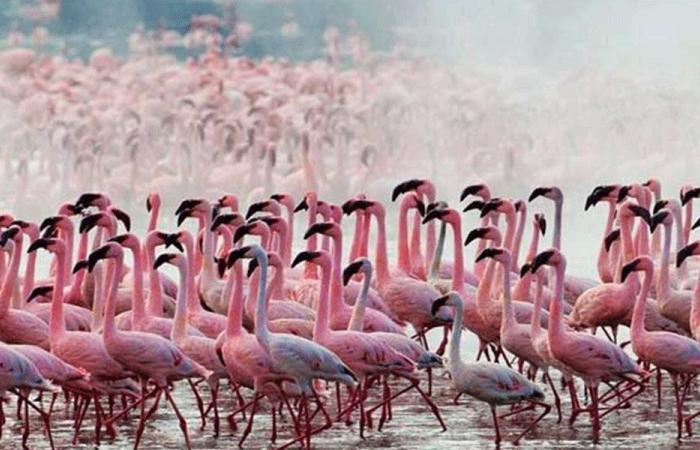 مجزرة بيئية بحق طيور الفلامينغو في لبنان (صور)