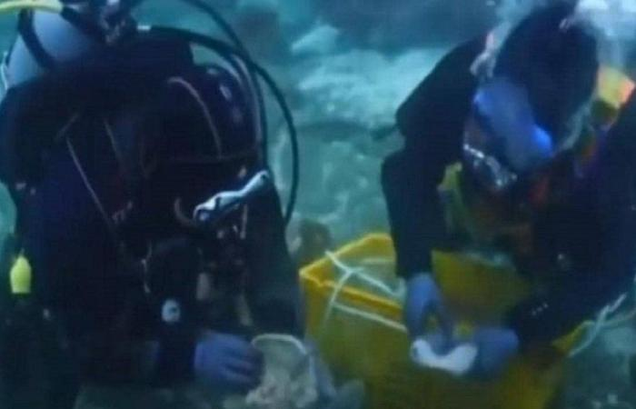 العثور على كنز مفقود منذ 1000 عام تحت سطح البحر