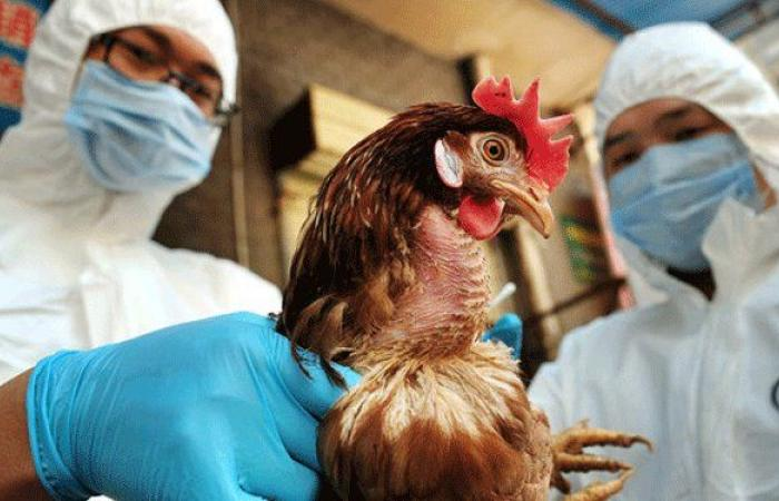 تفشي انفلونزا الطيور في محافظة يابانية