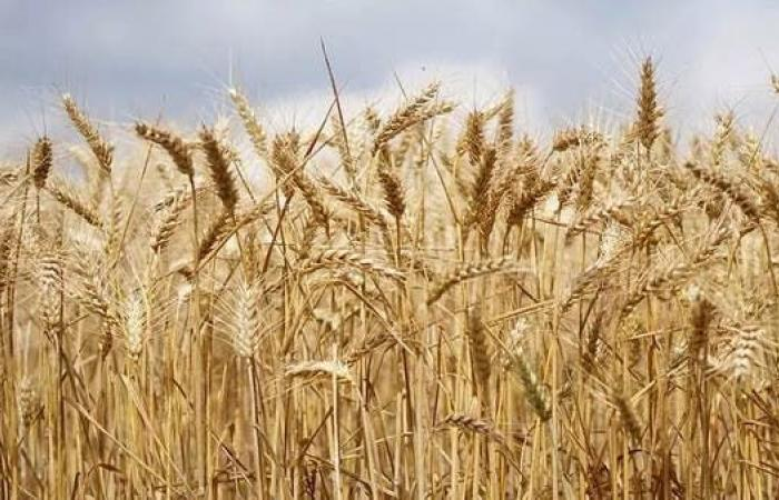 روسيا تسيطر على أسعار الغذاء بفرض ضرائب على الصادرات