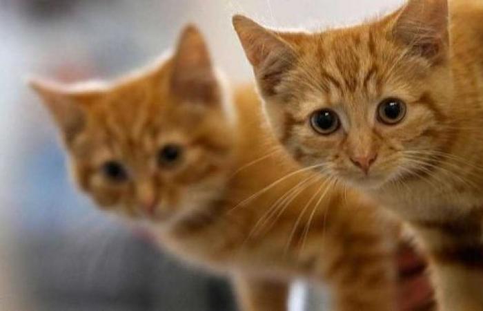 ماذا نفعل إذا عطست القطّة؟