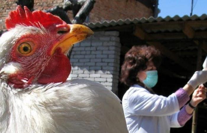روسيا تسجل أول إصابة بشرية بإنفلونزا الطيور AH5N8