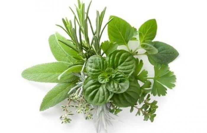 18 نوعاً من الخضار الورقية والأعشاب المليئة بالفوائد الصحية