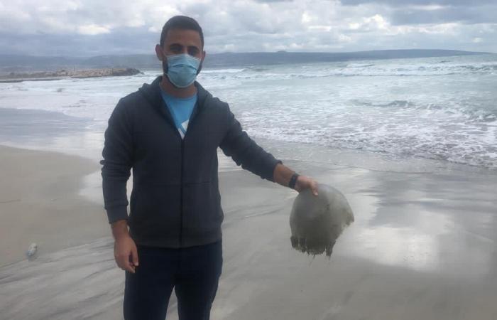 قناديل البحر تجتاح شاطئ صور