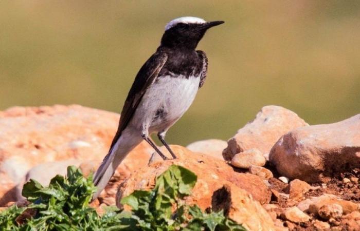 نتيجة التغيّر المناخي… ظهور طائر للمرة الاولى في لبنان