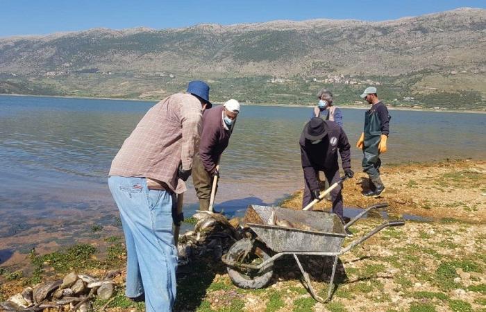 """""""نفوق"""" سمك الكارب في بحيرة القرعون كارثة كبرى"""
