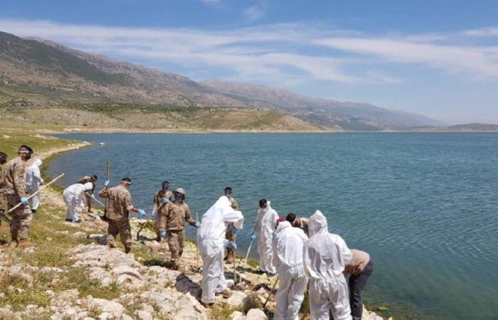 حملة رفع الأسماك النافقة من بحيرة القرعون مستمرة