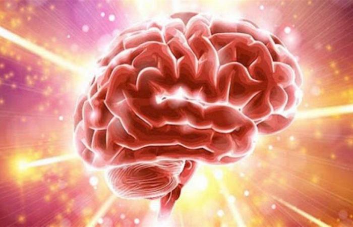 4 أطعمة تساعد على دعم صحة الدماغ