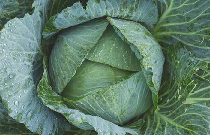 7 خضروات ورقية.. تناولها واختبر فوائدها