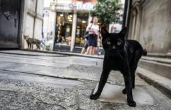 بعد 3 سنوات من التحقيقات.. كشف لغز مقتل مئات القطط بلندن