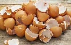 جديد الأبحاث العلمية.. تناول قشر البيض له مزايا مهمة!