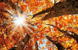 طقس خريفي دافئ.. والحرارة فوق معدلاتها الموسميّة!